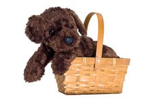 Free Cute Isolated Puppy And Basket Stock Images - 2325404