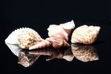 Free Shells Royalty Free Stock Images - 2326159
