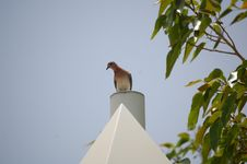 Free Wild Pigeon Stock Photography - 2326602