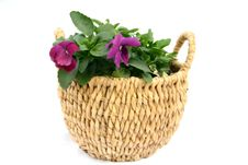 Free Basket Plant. Stock Images - 2328274