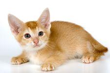 Free Kitten In Studio Royalty Free Stock Photo - 2328595