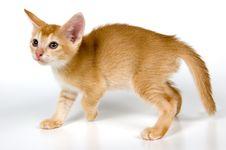 Free Kitten In Studio Stock Image - 2328601