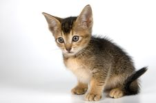 Free Kitten In Studio Stock Photography - 2328602