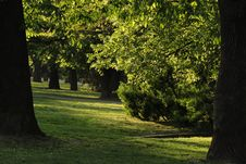 Free Trees In The Park Royalty Free Stock Images - 2329019