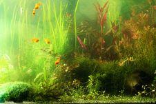 Free Aguarium Landscape Stock Photography - 2329272