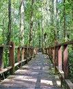 Free Wooden Bridge Through Peat Swamp Forest Stock Photos - 23206803