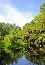 Free Peat Swamp Forest Stock Photos - 23206923