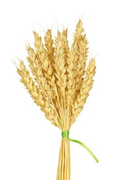 Free Wheat Stems Stock Images - 23205304