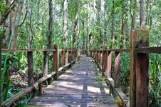 Free Wooden Bridge Through Peat Swamp Forest Stock Image - 23206751