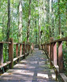 Free Wooden Bridge Through Peat Swamp Forest Stock Photos - 23206803