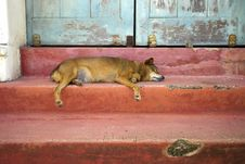Free Dog Sleeping On Stairs Royalty Free Stock Image - 23206856