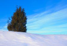 Free Lonely Tree In Snow Stock Photos - 23207263