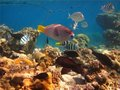Free Morning On A Coral Reef Stock Photography - 23214972