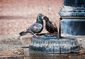 Free Pigeons Royalty Free Stock Photos - 23218008