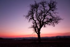 Free Single Tree After Sunset With Violet Skies, Pfalz Stock Photos - 23210593