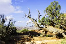 Free Desert Landscape Of Arizona, USA Stock Photography - 23211412