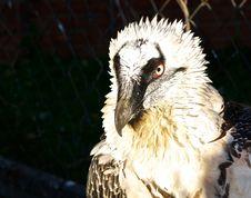 Free The Free Bird. Royalty Free Stock Image - 23213866