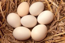 Eggs In Straw Nest Royalty Free Stock Photo