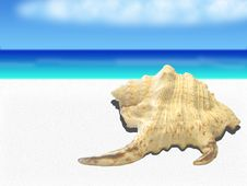 Free Sea Shell Stock Images - 23223524