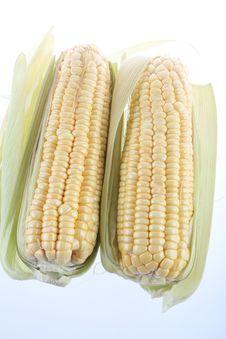 Free Corn Stock Photo - 23224860