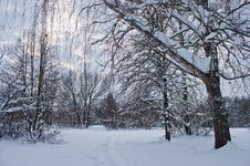 Free Winter Landscape Stock Photo - 23227930
