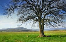 Lonely Tree In The Valley On A Background Of Mount Stock Photography