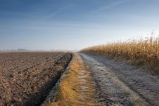 Road Through Corn Field And Plow