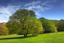 Free Trees In The Valley Stock Image - 23230861