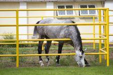 Free Beautiful Horse Royalty Free Stock Image - 23235616