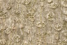 Free Texture Of A Magnolia Tree Stock Images - 23236734