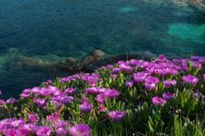 Free Spring On The Cliff Royalty Free Stock Photography - 23245197
