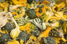 Free A Pile Of Gourds Royalty Free Stock Photography - 23245357