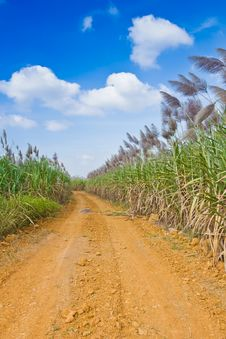 Free The Road To Corn Filed Royalty Free Stock Image - 23245596