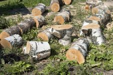 Free Birch Firewood Stock Images - 23251754