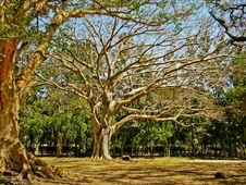 Free The Giant Tree Stock Photo - 23255730
