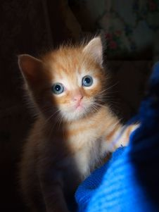 Free Red Kitten Stock Images - 23260404