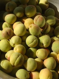Free Young Peaches Stock Image - 23260681