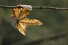 Free Autumn Leaf Stock Image - 23266441