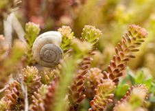 Free Snail Resting Stock Photography - 23266752