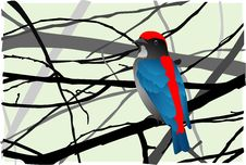Free Scarlet-backed Flowerpecker Royalty Free Stock Photography - 23275997