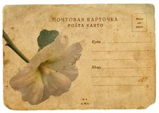 Free Blooming Flower Of Mallow. Old Postcard Royalty Free Stock Images - 23276749