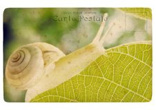 Free Snail. Old Postcard Stock Image - 23276811