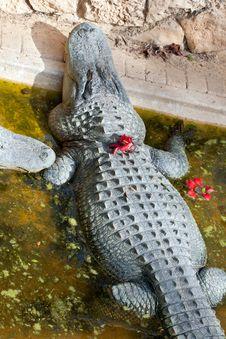 Free Cute Crocodile Stock Photo - 23277030