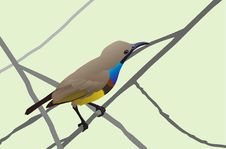 Free Sunbird Royalty Free Stock Photo - 23278425