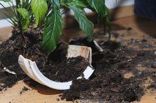 Broken Up Pot With Flower Stock Photo