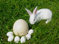 Free Rabbit And Eggs Royalty Free Stock Images - 23284939
