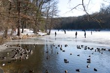 Free Duck Pond In The Ice Stock Photos - 23280533