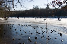 Duck Pond In The Ice Royalty Free Stock Photos