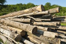 Free Logs Loosely Piled Before Being Cut Up Stock Image - 23285761