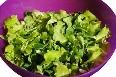 Free Fresh Green Salad Stock Images - 23285914